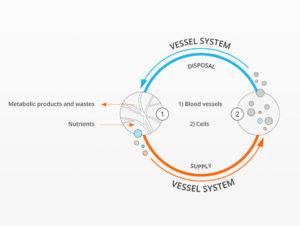 vessel-system-1024x770